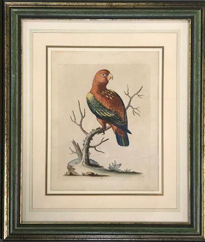 George Edwards  Paire d'estampes en couleur sur papier  Oiseaux  L'une signée et...