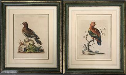 George Edwards  Paire d'estampes en couleur...