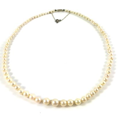 COLLIER de perles de culture d'eau de mer....