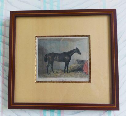 SET OF THREE English polychrome engravings representing horses. 19th century. 10...