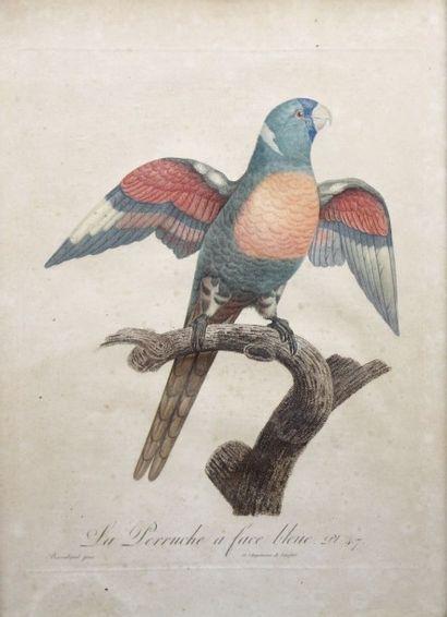 Jacques Barraband (1767-1809) d'après E cole...