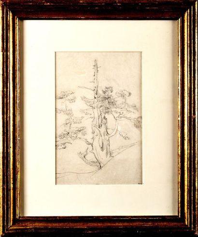 Théodore ROUSSEAU (1812-1867) Arbres, étude...