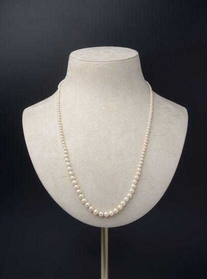 Collier de cent quarante-cinq perles de culture...