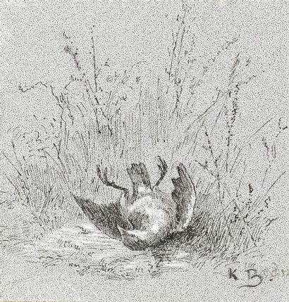Karl BODMER (XIXe siècle). Grive morte. Dessin...
