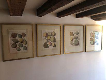 Série de cinq gravures représentant des fruits...