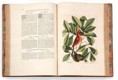 CATESBY MARK (1683-1749). Naturaliste et artiste anglais. The Natural History of...