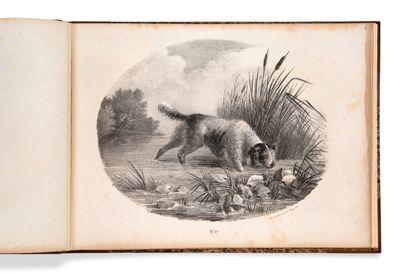 • [CHASSE]. [G***] [Collection de chiens de chasse, dessinée d'après nature]. [Paris,...