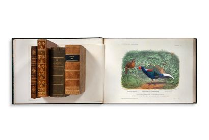 • BOTANIQUE Illustration Zoologique ; FRANKLIN...