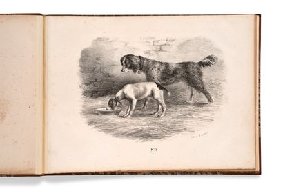 • [CHASSE]. [G***] [Collection de chiens...