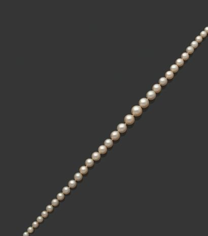 «PERLES FINES ET CULTURE» Collier de 49 perles fines et 14 perles de culture en...