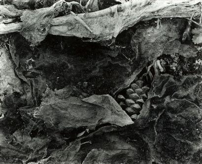 FREDERICK SOMMER (1905-1999)