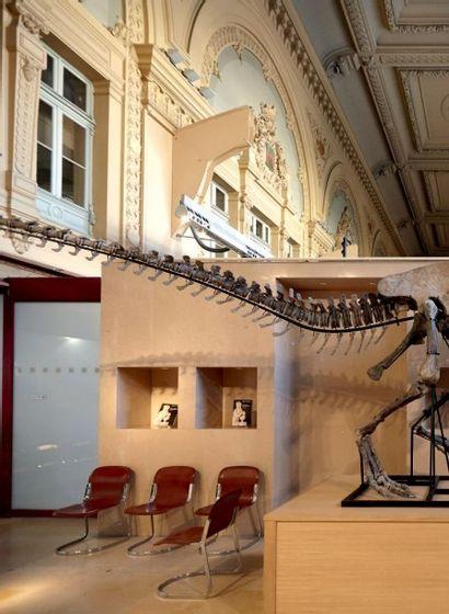 Rare et impressionnant squelette complet de dinosaure Allosaure (marsh-1877), USA...