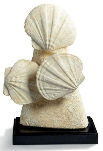 Bloc de trois grands spécimens de Gigantopecten, Miocène. Lacoste, Vaucluse - France...