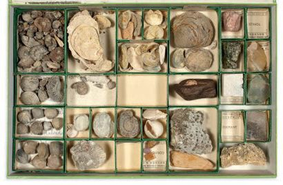 Collection de quatre coffrets de fossiles divers