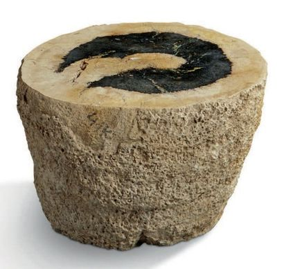 Tronc formant un tabouret. Bois fossile de...