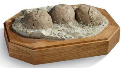 Ponte de trois œufs de dinosaure Crétacé supérieur terminal. Rognacien (60 Millions...