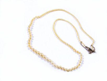 Collier composé d'une chute de 153 perles supposées fines non testées. Diam.: 2...