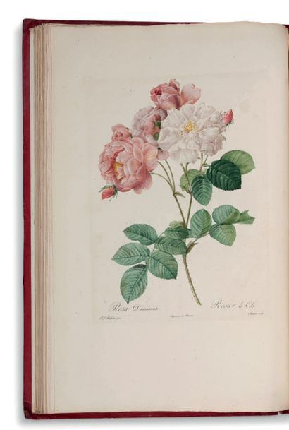 Pierre-Joseph REDOUTE (1759-1840) Les Roses par P.J. Redouté, peintre de fleurs,...