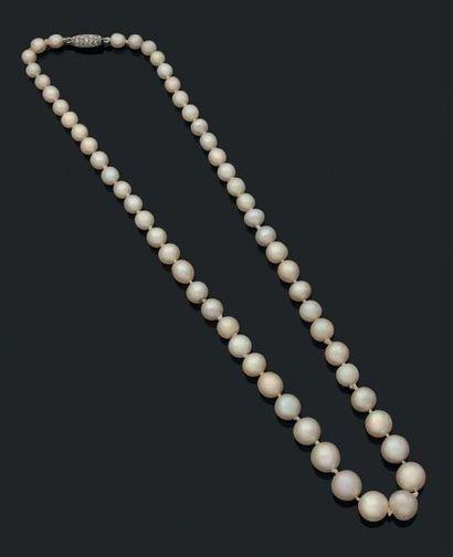 Perles fines Collier composé de 57 perles...