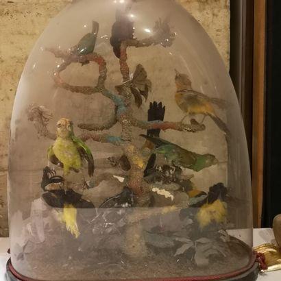 Globe aux oiseaux