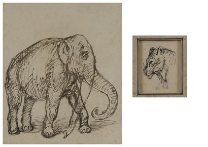 According to STEINLEN  The elephant  Reproduction....