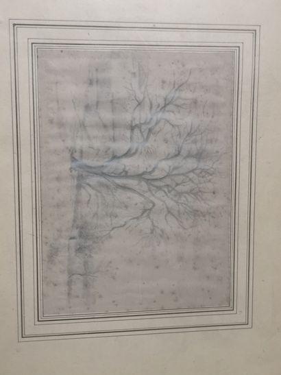 Ecole FRANCAISE du XIXème  Le grand arbre...