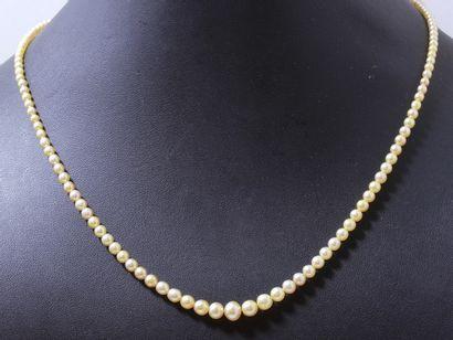 Collier composé d'une chute de perles fines...
