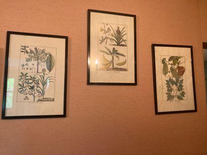 Ensemble de trois lithographies sur les plantes...