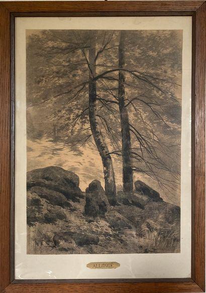 Auguste Allongé (1810-1898)  Arbres  Fusain...