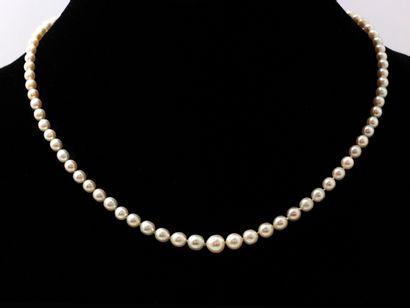 Collier composé d'une chute de 81 perles...