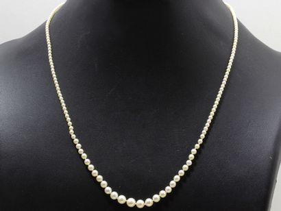 Collier composée d'une chute de perles fines...