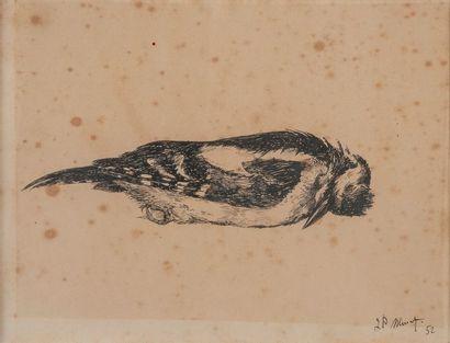 J.P MURAT, Oiseau ,estampe, 52. 26 x 20 cm