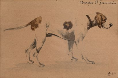 Charles de CONDAMY (1855-1913)  Braque Saint...
