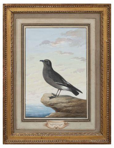 Christian Von MANNLICH (1741-1822) Oiseau...