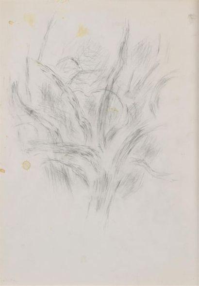 Jean René BAZAINE (1904-2001)  Etude d'arbre...