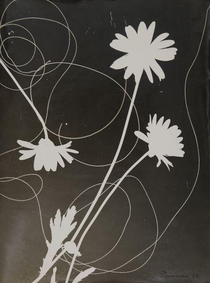 Anton PRINNER (née Anna, 1902-1983)  Rayogramme...