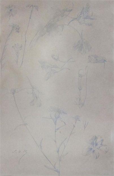 Luc-Olivier MERSON (1846-1920)  Etude pour des bleuets et des capucines.  Dessin...