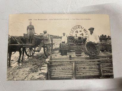 Un album de cartes postales des côtes de...