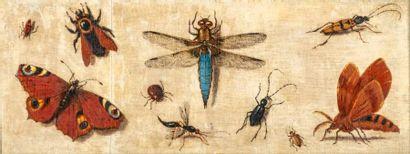 Magdalena VAN DEN HECKEN (Anvers, 1615 - Amsterdam, après 1635) Étude de papillons...