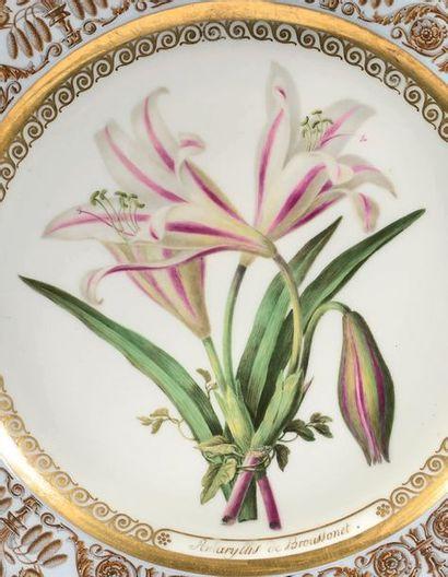 SÈVRES Assiette en porcelaine à décor polychrome et or au centre de fleurs botaniques...