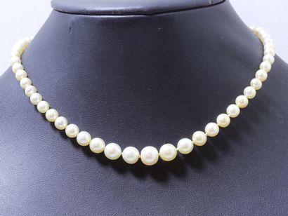 Collier composé d'une chute de 62 perles...