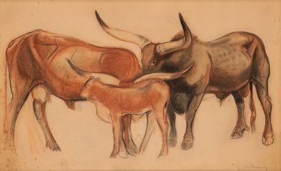 Philippe Albin de BUNCEY (1905-1978). Bœufs asiatiques. Fusain et pastel sur papier...