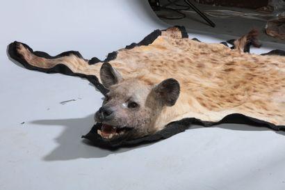 Carpette d'Hyène tachetée, Crocuta crocu...
