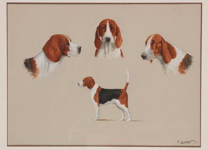 François LEBERT (1948- ) Etude de chien : beagle anglo-francais et poitevin. Gouache...