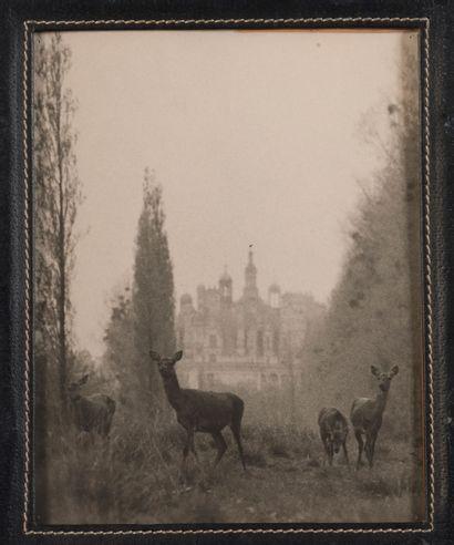 Cervidés à Chambord. Deux photographies. Cadre cuir. Dim.: 29 x 23cm