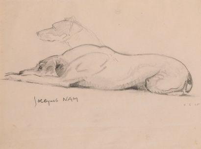Jacques Lehmann dit Jacques NAM (1881-1974). Etude de chien couché. Fusain sur papier...