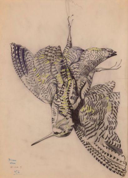 Henri de LINARES (1904-1987). Etude de bécasse. Encre sur calque avec léger rehaut...