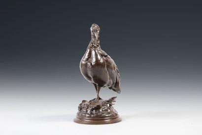 Louis Théophile HINGRE (1832 - 1911). Dindon. Bronze à patine brune signé en creux...