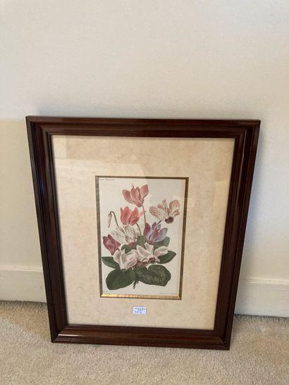 Six gravures de fleurs, cadre imitant l'acajou....
