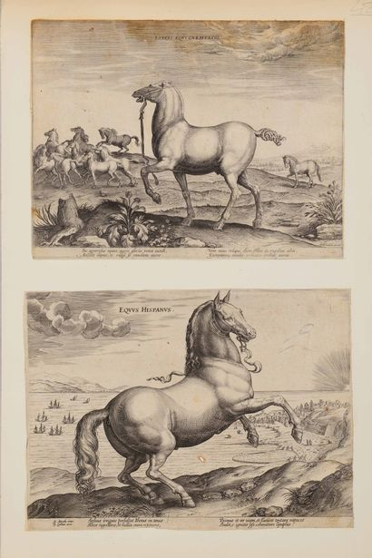 Philippe GALLE (1537 – 1612)  Chevaux.  4...